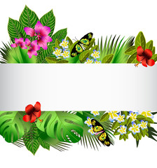 Tropical flowers and leaves over white
