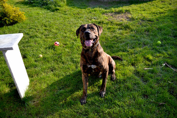 dog in the garden, green, happy dog