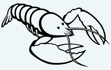 Crayfish sketch. Image isolated on blue background