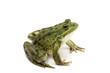 green spotted frog on white background - 67455887