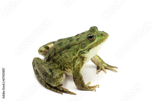 Aluminium Kikker green spotted frog on white background