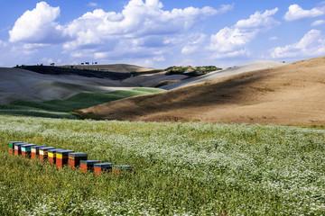 Alveari nella campagna toscana, Italia