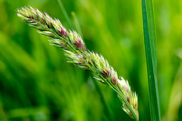 Nature Background Grass