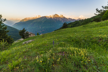 Alpine meadow at sunrise