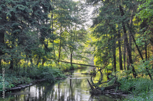 small river in forest - 67463622