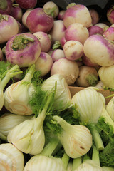 Turnip and fennel