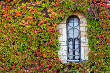 window  with orange and green leaves
