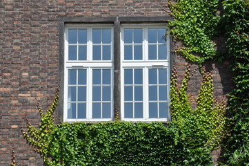 Brick wall with window wall covered by ivy