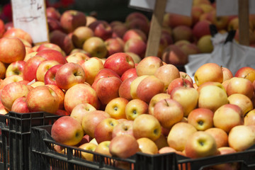 Crates of freshly picked apples on the green market.