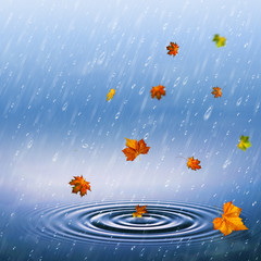 autumnal backrounds with fallen foliage and rain drops