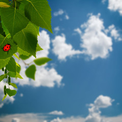 beauty summer backgrounds with green foliage and red  ladybug