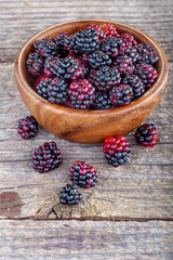 Organic home grown freshly picked blackberries from the garden