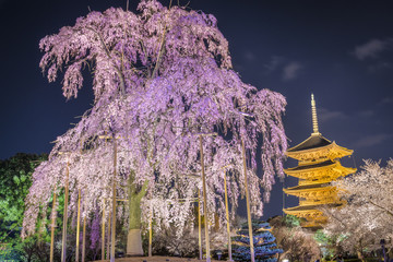To-ji Pagoda, Kyoto, Japan in the Spring