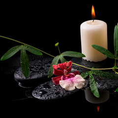 Beautiful spa concept of white and red orchid (cambria), green t