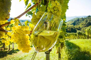 Weinglas mit Wein im Weingarten