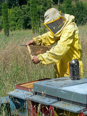 Beekeeping - checking the hive.