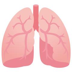 医療 肺 臓器
