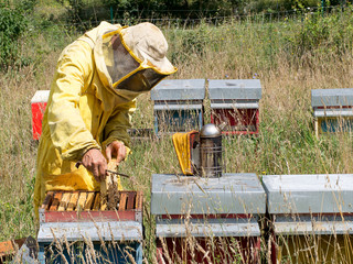 Beekeeping, bee-keeping. Apiculture.