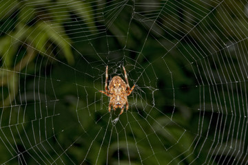Spider hanging from its web