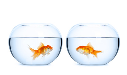 Small goldfish in aquariums, white background