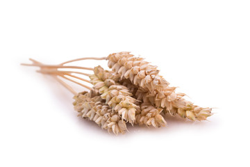 some ears of wheat on a white background
