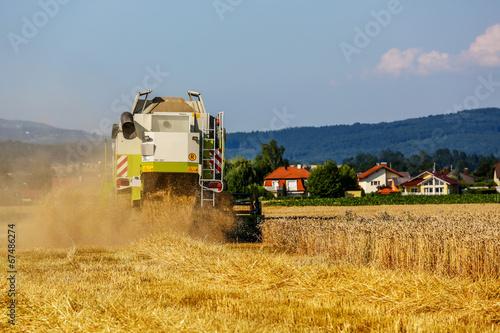 Getreidefeld mit Weizen bei der Ernte - 67486274