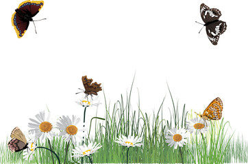 chamomile flowers and five dark butterflies