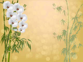 white orchid flowers and green bamboo