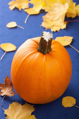 pumpkin on blue background