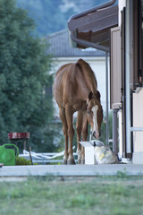 horse outside the house