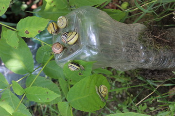 виноградные улитки на пластиковой бутылке