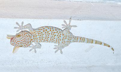 gecko  Gekkonidae