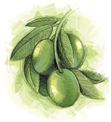 Green tasty Olives