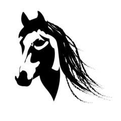 Silhouette beautiful Arabian horse