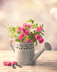 Roses In Watering Can