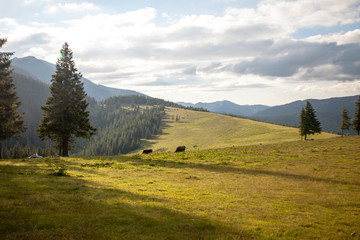Summer day in Carpathian mountains