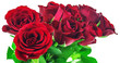 canvas print picture - Bouquet of red roses on white background with clipping path