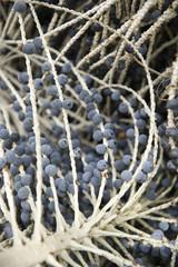 Acai Açaí Palm Fruit Tree Branch Close-Up