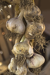 Organic garlics hanging in a market place