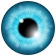 Eye iris - 67501468