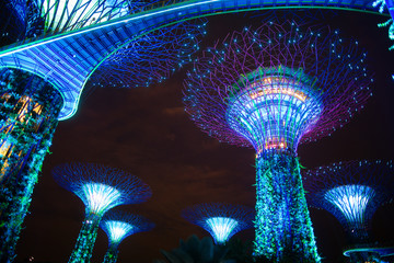 The Supertree at Gardens by the Bay by night