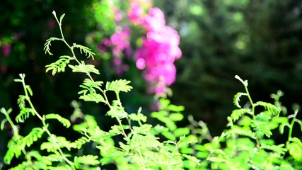 Green and fucshia in the garden