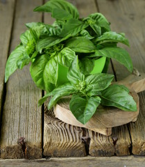 fresh green basil on a wooden background
