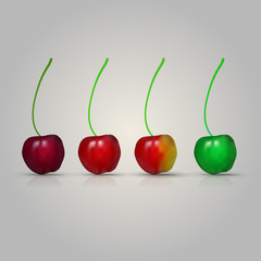 Illustration of four cherries