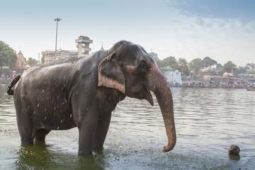 indian elephant enjoying bath