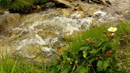 Cascade on small mountain stream in Alps, water of torrent