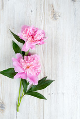 peony flowers on wooden surface