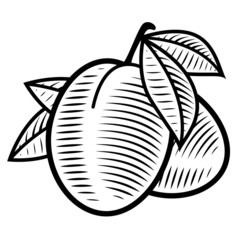 Plum engraving vintage illustration