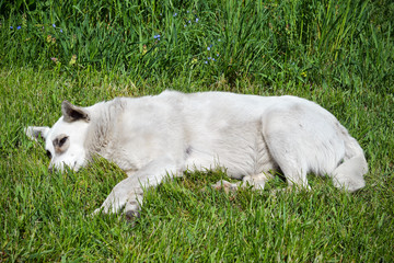 Stray dog ​​lying on the grass