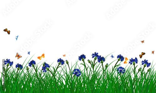Cornflowers on summer meadow